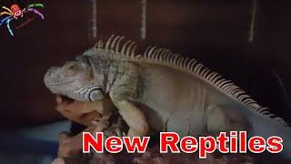 Download Reptile Rescue Video