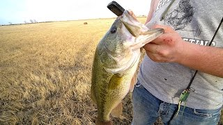 Download my BEST day Pond Fishing EVER!!! Video