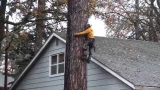 Download Pine Tree Removal Part 2 Video