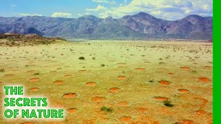 Download Mystery of the Fairy Circles - The Secrets of Nature Video