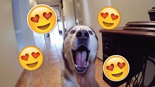 Download What Coming Home to my Husky Looks Like!! Video