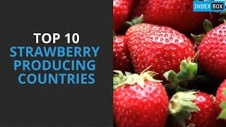 Download Top 10 Strawberry Producing Countries Video