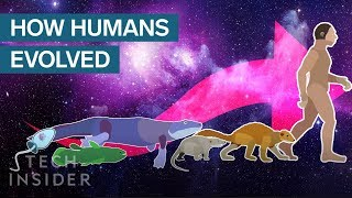 Download Incredible Animation Shows How Humans Evolved From Early Life Video