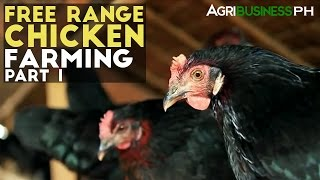 Download Free Range Chickens Farming Part 1 : Free Range Chickens Farming | Agribusiness Philippines Video