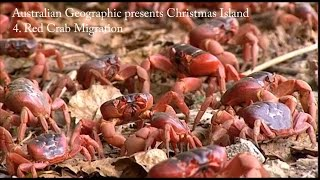 Download Australian Geographic presents Christmas Island - Part 4: The Red Crab Migration Video