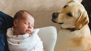 Download Dog Meeting Baby for the First Time Compilation Video