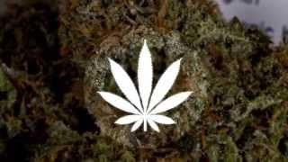 Download Loyle Carner - Mufasa (Prod. CoryaYo) Video