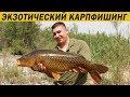 Download Незабываемая рыбалка на оз. Кинерет. Карпфишинг 2018 Video
