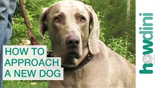 Download How to approach and greet a new dog Video