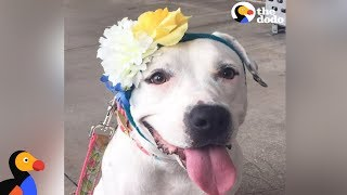 Download Rescued Dog Gets Hats From Around The World To Cover Her Abuse Scars | The Dodo Video