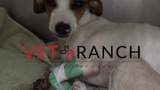 Download Parvo Puppy Adopted then Returned to Shelter Video