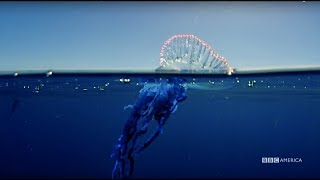 Download Planet Earth: Blue Planet II | Portuguese man o' war | Coming to BBC America 2018 Video