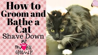 Download How to Groom a cat Video