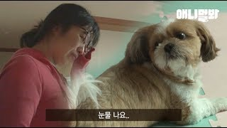 Download 가족들의 관심이 줄었다고 생각한 강아지가 보인 행동..ㅣDog Thinks His Family Is Less Interested In Him And Behaves Like.. Video
