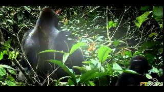 Download Kingdom Of The Apes S01E01 Clash Of Kings Video