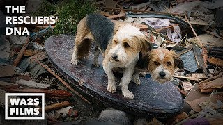 Download We Cried Tears of Joy Watching This Hope For Paws Reunion Between Boy & Howl Of A Dog After Tornado Video