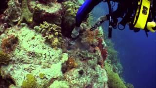 Download Bonaire Dive Trip 2013 Video