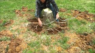 Download Tree Stump Removal Video