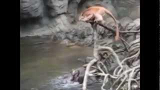 Download Otter Revenge - The Day the Monkeys Went Too Far Video