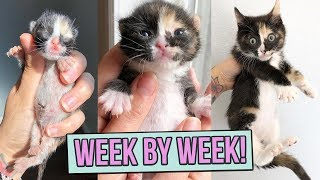 Download Learn How Baby Kittens Grow: 0-8 Weeks! Video