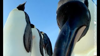 Download Robotic Penguin Lays EggCam & Gets A Surprising Viewpoint! Video