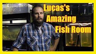 Download L.R.Bretz's Aquatics Fish Room Tour Part 2 | Rainbowfish Livebearers Ponds Planted tanks Shrimp Video