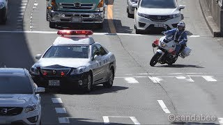 Download 違反車両は逃がさない!青バイ・パトカー・白バイの交通取り締まり! Video