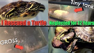 Download I Rescued a Turtle That was Neglected for Over 12 Years Video