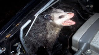 Download Are There Creatures Living in Your Car You Don't Know About? Video