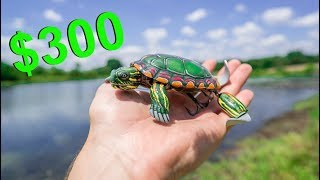 Download $300 TURTLE LURE May be The Craziest Lure Ever Made! (Here's Why) Video