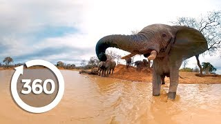 Download Elephants on the Brink (360 Video) Video