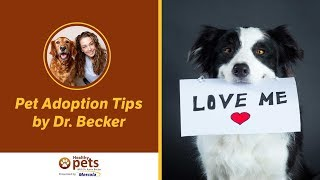 Download Pet Adoption Tips by Dr. Becker Video