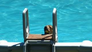 Download My dog swimming Video