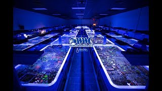 Download First Tour of the WorldWide Corals Reef Aquarium Superstore Video
