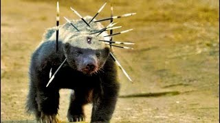 Download Top 15 MOST Aggressive Animals on Earth Video