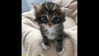 Download Kitten found abandoned in a bush, has her life turned around, journey to forever home Video