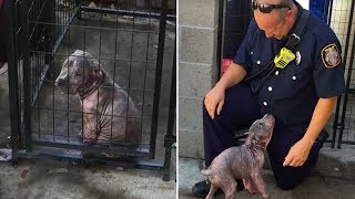 Download This Abused Puppy Wasn't Happy At The Shelter, But Then She Saw The Hero Who'd Saved Her Life Video