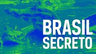 Download Brasil Secreto Pantanal Video