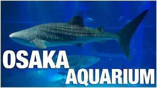 Download Osaka Aquarium Kaiyukan Tour Video