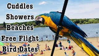 Download A Day In The Life Of Mikey The Macaw Video