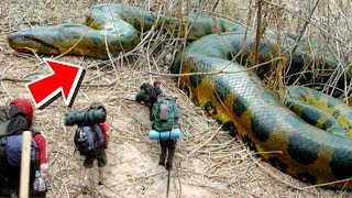 Download HUGE SNAKES AND ALLIGATORS MEET THE BOY SCOUTS!! | BRIAN BARCZYK Video