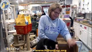 Download FFRC Boxes and Updates 01-17-2020 Friends of Felines Rescue Center (FFRC) Video