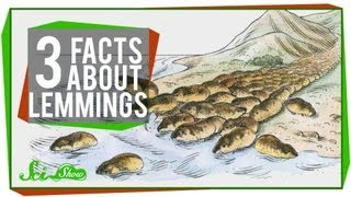 Download 3 Facts About Lemmings Video