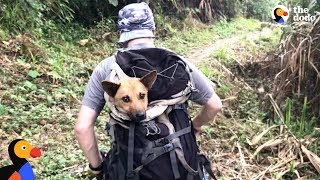 Download Guys Hike For Hours To Save Dog When Everyone Said It Couldn't Be Done | The Dodo Video