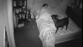 Download Paranormal Activity CCTV Ghost Footage Bossy the Psychic Dog Video