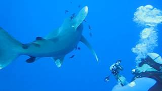 Download Elphinstone: the fight with shark Video