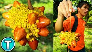 Download Top 10 Fruits You've Never Heard Of Part 9 Video