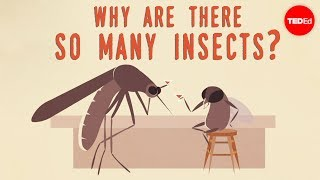 Download Why are there so many insects? - Murry Gans Video