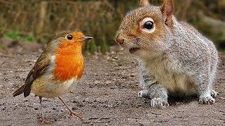 Download Videos für Katzen Zum Spielen : Vögel und Eichhörnchen Video