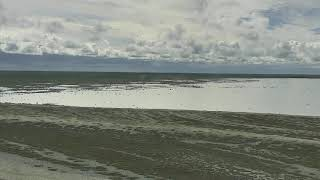 Download Polar Bears Cape North - Wapusk National Park Cam 07-30-2018 13:27:31 - 14:07:04 Video